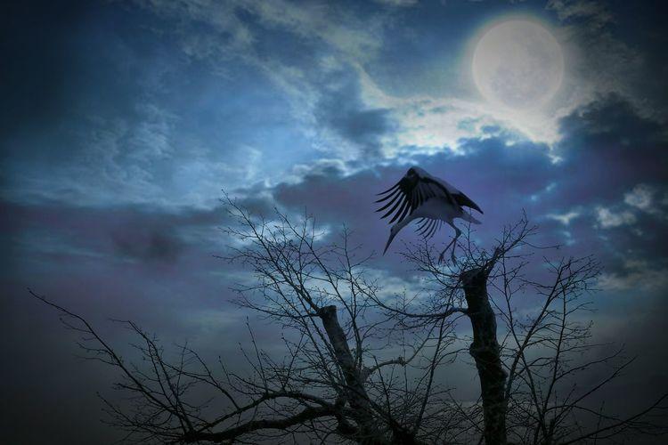 moon-landing First Eyeem Photo bird night moonshine