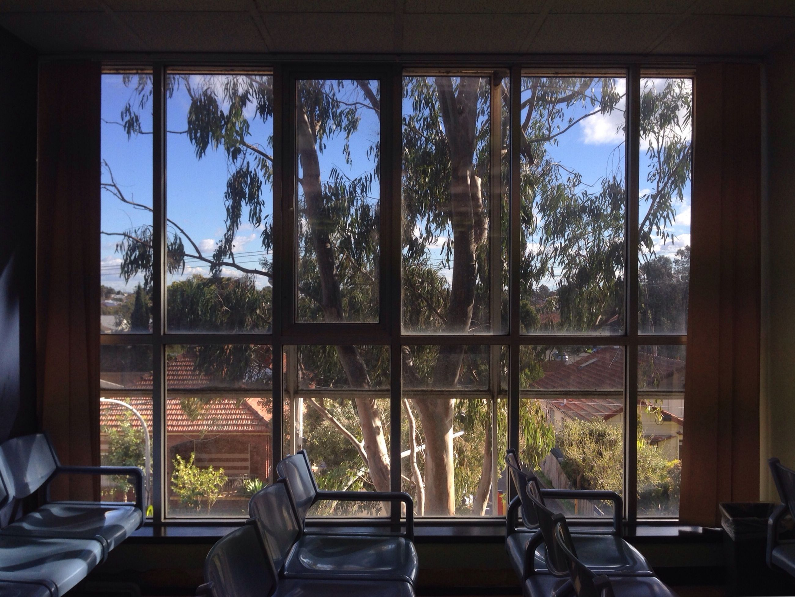 window, indoors, glass - material, transparent, tree, curtain, house, home interior, chair, built structure, day, architecture, absence, sunlight, growth, table, glass, no people, window frame, window sill