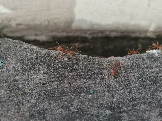 Ant Colony Insect