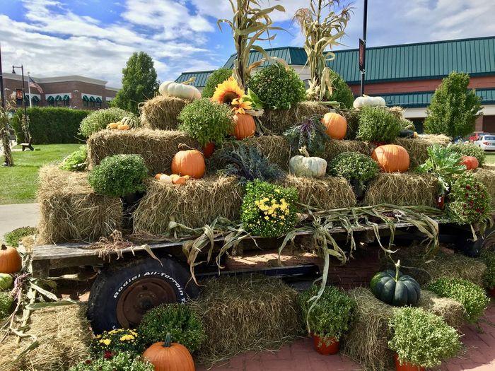 Autumn Harvest Autumn Corn Stalks Fall Harvest Hay Bale Mums Pumpkins Sun Flower Wagon