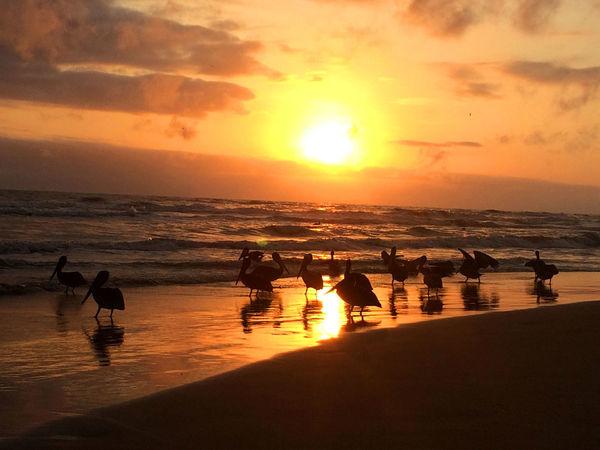 Beach Photography Beauty In Nature Horizon Over Water Orange Color Outdoors Sea Sun Sunlight Sunset Vacations Venezuela Water