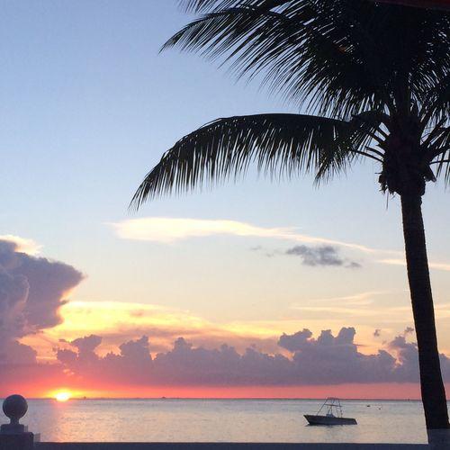 Cozumel Mexico Paradise Traveling Travel Photography Sunset EyeEm Gallery Eye4photography  Beach Coconut Trees