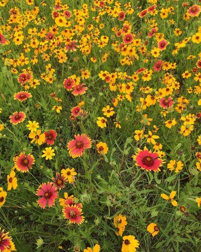 Wildflowers Yellow Springtime