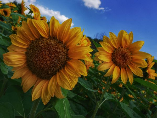 I feel sunny today! The Environmentalist – 2014 EyeEm Awards Flowerporn EyeEm Nature Lover Our Planet