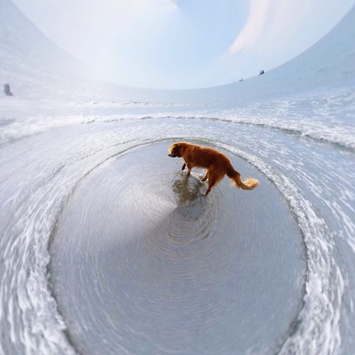 High angle view of dog on shore