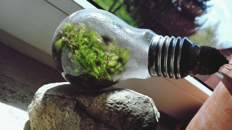 Recycling Creative World Create A New World Green Moss Brown Water Drops Glass Windows Plants Bulb Being Creative. Sand