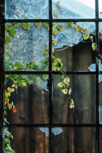 Close-up of wet window