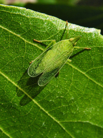 Animal Mimicry Animal Themes Animal Wildlife Animals In The Wild Close-up Green Color Insect Leaf Macro Nature No People Outdoors