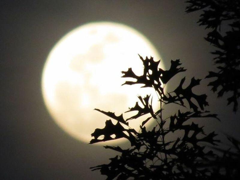 Moonlover Nature Photography Gods Creation Beautiful Nature