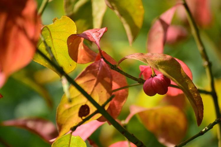 Berries Tree