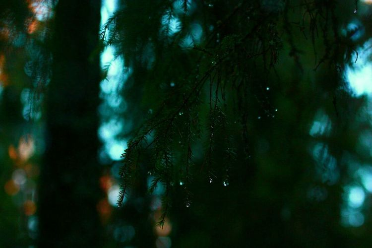 May 11 2016 The Great Outdoors With Adobe Tree Branch Forest Night Dawn Sunset Evening Dark Drops Water Rain Pine Christmas 2013 Anna Finland National Park Land The Photojournalist - 2016 EyeEm Awards Nature's Diversities