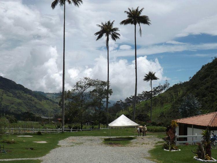 La hermosa palma de cera. Colombia Es Bella Eyem Nature Lover Eye Em Best Shots Hdr_Collection
