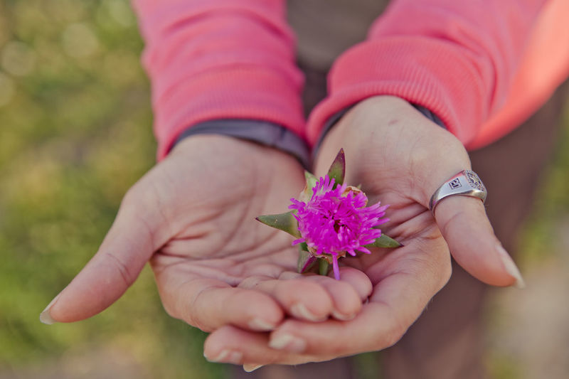 Bloom Floral Flower Flower Head Focus On Foreground Fragility Freshness Gardener Grace Gracious Greenthumb Happy Holding Joy Joyful Leisure Activity Lifestyles Love Mothering Outdoors Person Petal Pink Color Simplicity Spring