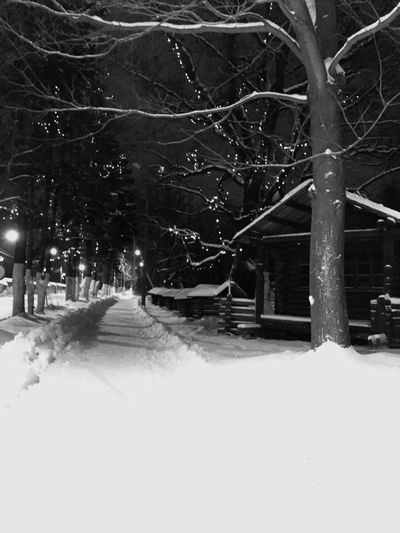 Snow Cold Temperature Winter Tree Nature Plant Architecture Transportation Environment City Frozen Street Covering No People Snowing Outdoors Extreme Weather Building Exterior Night Bare Tree