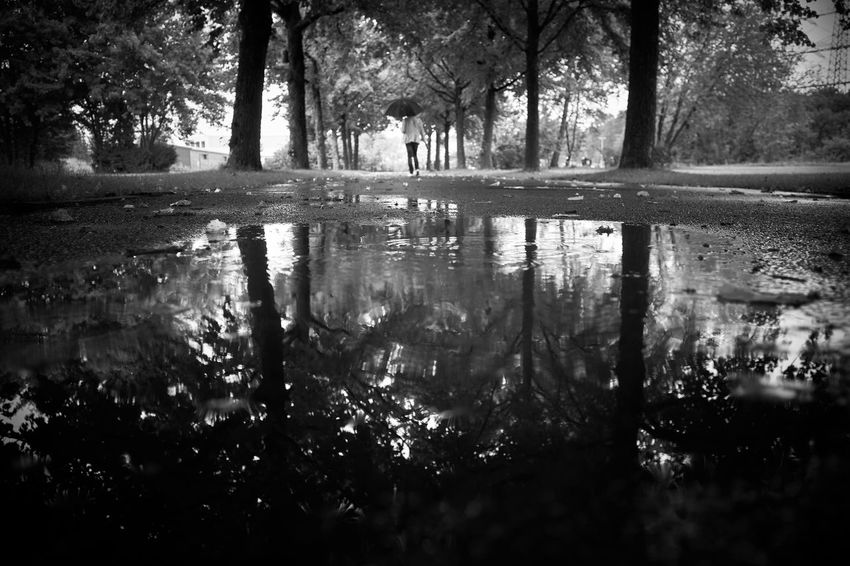 autumn in monochrome Monoart Autumn In Monochrome Mood Woman Umbrella Perspective Streetphotography Water Reflections Autumn Melancholy Tranquility Tranquil Scene Silence EyeEm Gallery Light And Shadow Lucky's Memories Monochrome Lucky's Monochrome Blackandwhite Photography Nature EyeEm Nature Lover Black & White Puddle Rain Tree Water Reflection Silhouette Sky Calm