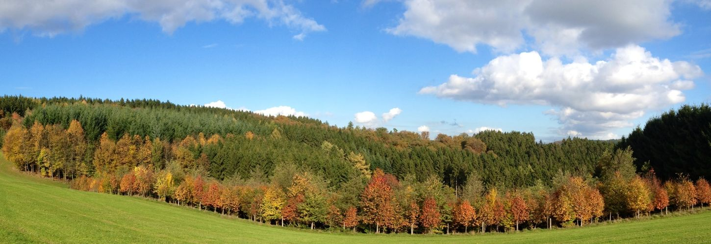 Indian Summer in Germany Indiansummer Autumn Colors Wood Panorama