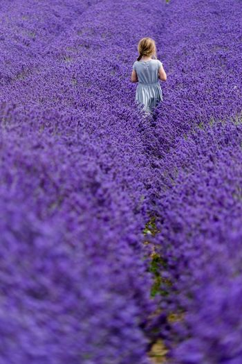 Lost in lavender Rear View Purple Lavender Real People Flower One Person Blond Hair Lifestyles Women Childhood Beauty In Nature Outdoors Day Nature Crocus Adult People