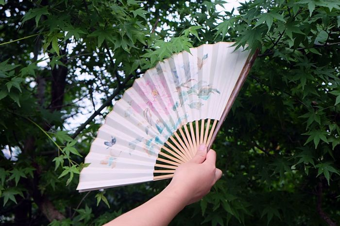 Folding Fan Chinese Paintings Human Hand One Person Real People Hand Plant Hand Fan Tree Lifestyles Nature Green Color