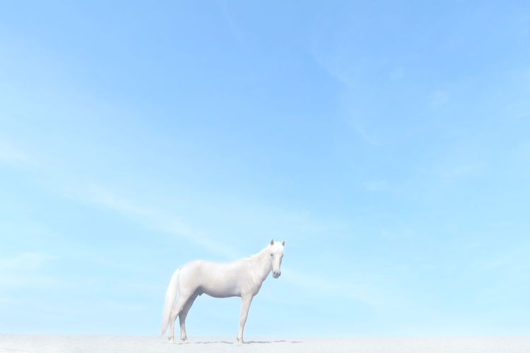 Side view of white horse standing against blue sky