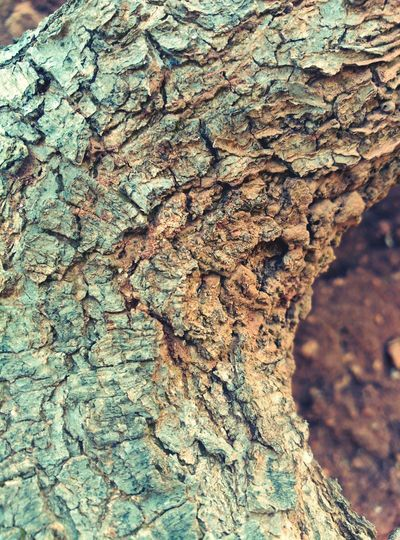 Caras Tree Trunk Tree Textured  Wood - Material Beauty In Nature Faces Of EyeEm Cares Beauty In Nature Caminant  Nature_perfection Nature Faces In Nature Natura Tree Naturelovers Strange Forms Of Nature