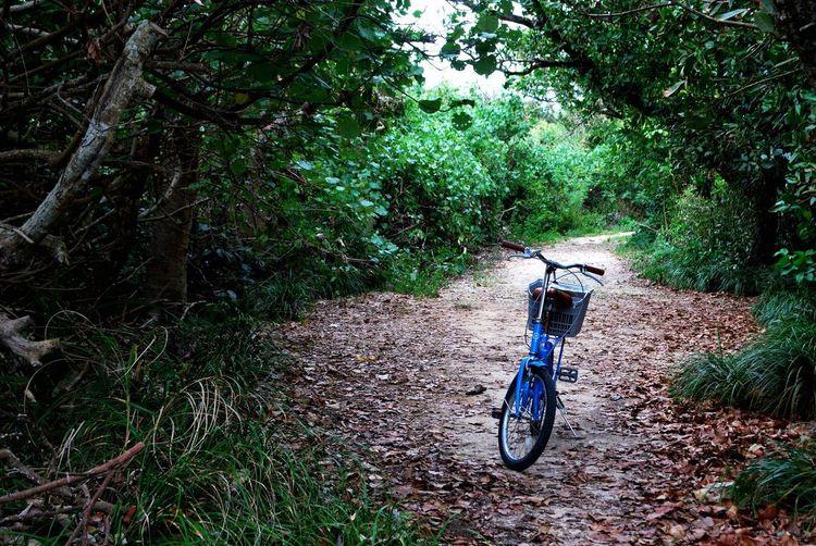 波照間島 Haterumajima Okinawa Jungle Plant Bicycle Transportation Mode Of Transportation Tree Land Vehicle Nature Green Color Outdoors No People Grass