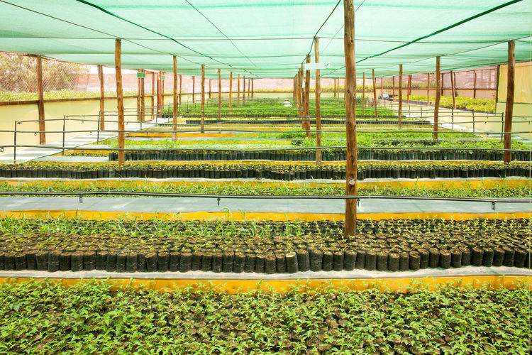 Scenic view of field seen through greenhouse