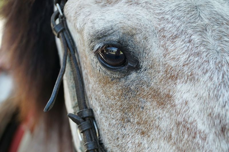 Eye Reflections Taking Photos Animal Pony Staring At Me Eye4photography  Getting Inspired From My Point Of View