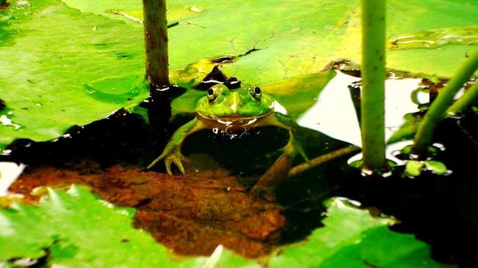 Peeking Frog First Eyeem Photo Bangladesh Funshot Adventure In Waterland