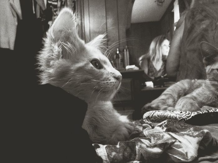 Motning coffee with my momma & the kittens ♡ EyeEm Nature Lover Capa Filter CameraFV5 Bw_collection Capture The Moment