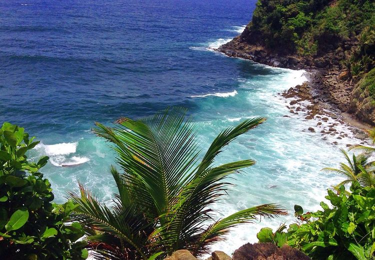 Only in Dominica ❤️ 767 Dominica Carib Territory Atlantic Ocean Coconuts Trees Nature