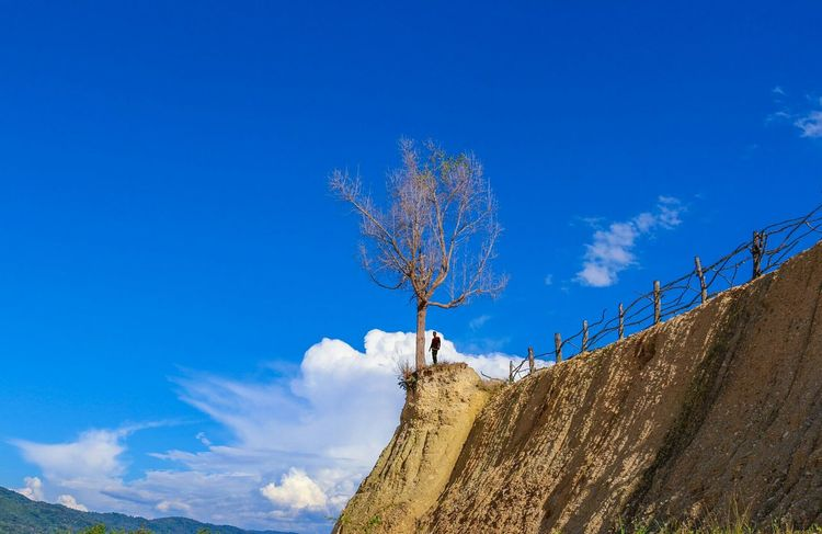 A single tree... Nature Landscape Photography Wonderfulindonesia Lost In The Landscape