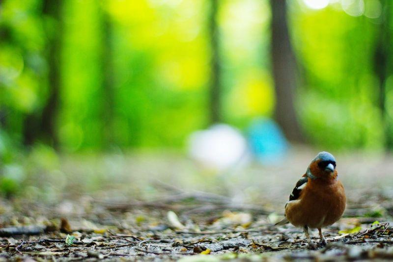 Nature On Your Doorstep птица Bird Nature Природа