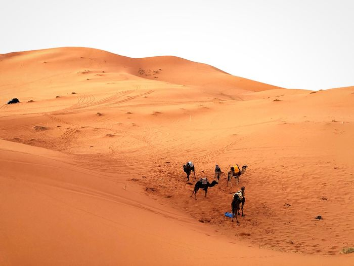 SHARA EyeEm Selects Desert Land Sand Sand Dune Landscape Environment Nature Beauty In Nature Travel Vacations