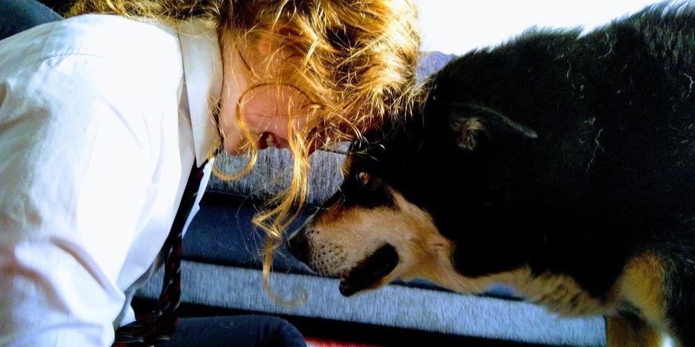 Eye of the Tie Girl Dog Uniform Red Hair Girl Kelpie Collie Cross Kelpies  Love Pets Close-up