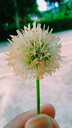 Nature Photography Flower Photography Liasaarfe Rio De Janeiro