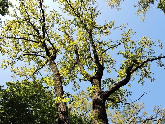 2016 Tree Plant