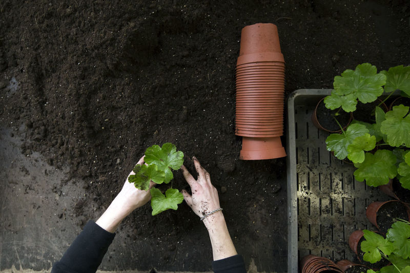 High angle view of woman planting plant in mud by pots