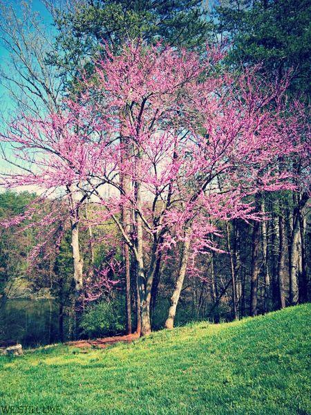 Nature Life WeStillLive