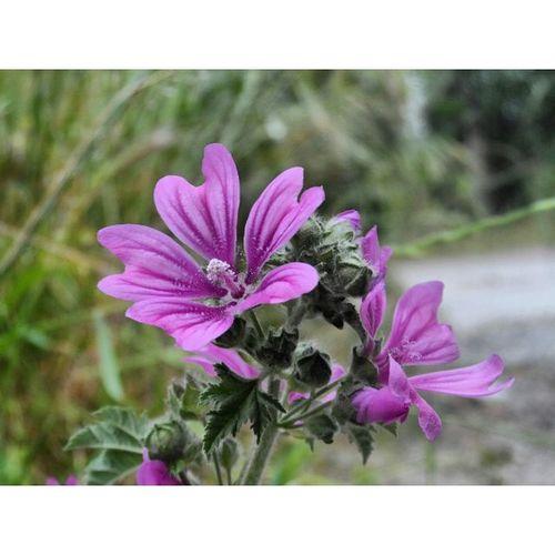Çiçeklerde bir telaş var, yağmur gecikti. 🌸☔