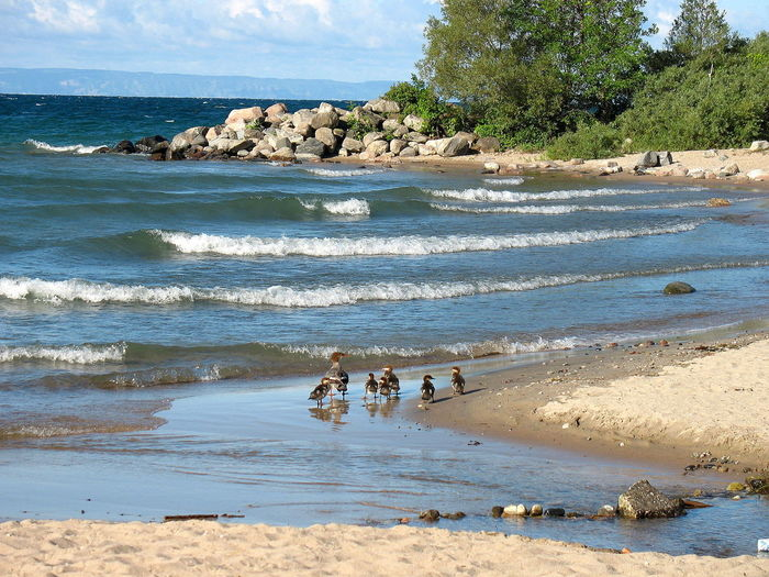 We Are Family [SP] ~ Beach Ducks Family Of Ducks Nature Erieau Ontario Outdoors Rocks And Water Rocks On The Shore Sea Seaside Tree Water Waves Waves Rolling In