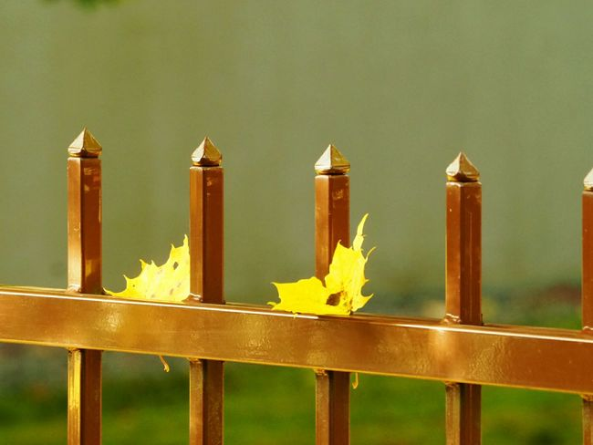 Yellow Outdoors Metallic Fence Autumn Colors Walking In The City Yellow Leaves Nature In City