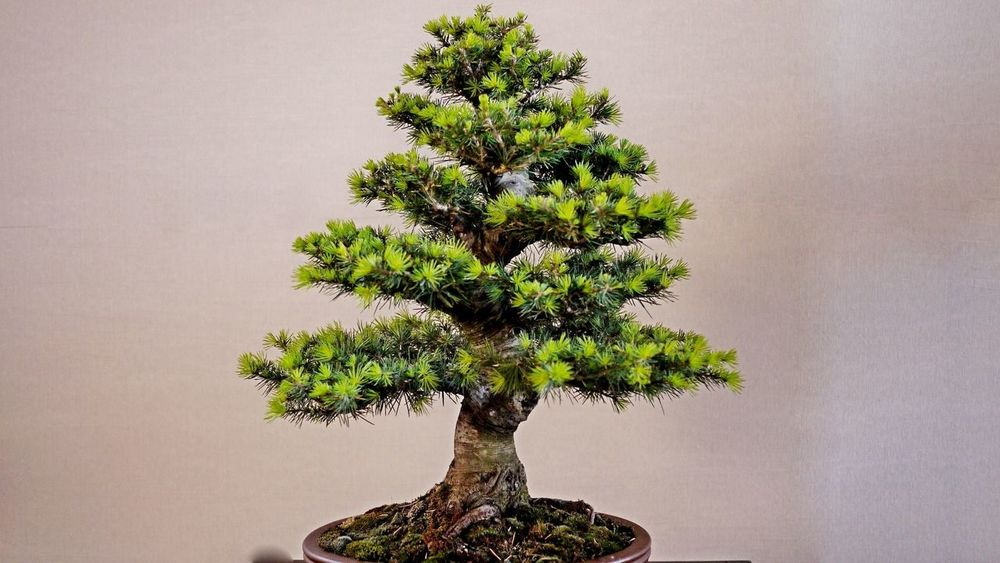 Bonzai Beauty In Nature Bonsai Tree Branch Close-up Day Growth Lone Nature No People Outdoors Plant Sky Tranquility Tree Tree Trunk