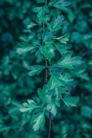 Close-up of leaves growing on land