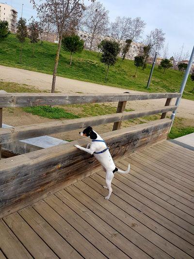 Animal Themes Naturelovers Dog Lover DogLove Dogs Of EyeEm