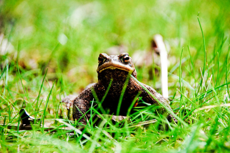 Animals In The Wild Frog Toad Amphibian Animal Themes Animal Wildlife Skin Toad Migration Toads And Frogs Vertebrate Wizened Wrinkled Wrinkled Skin