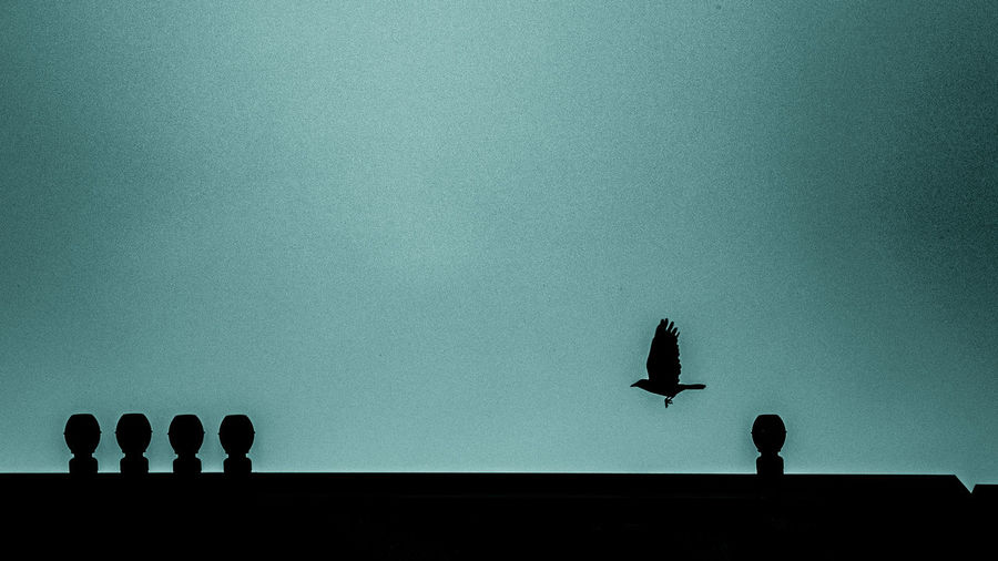 Low angle view of silhouette birds perching on building