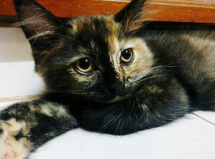 Luna the cat. Cat♡ Lunathecat Check This Out Hello World Monday Nexus5
