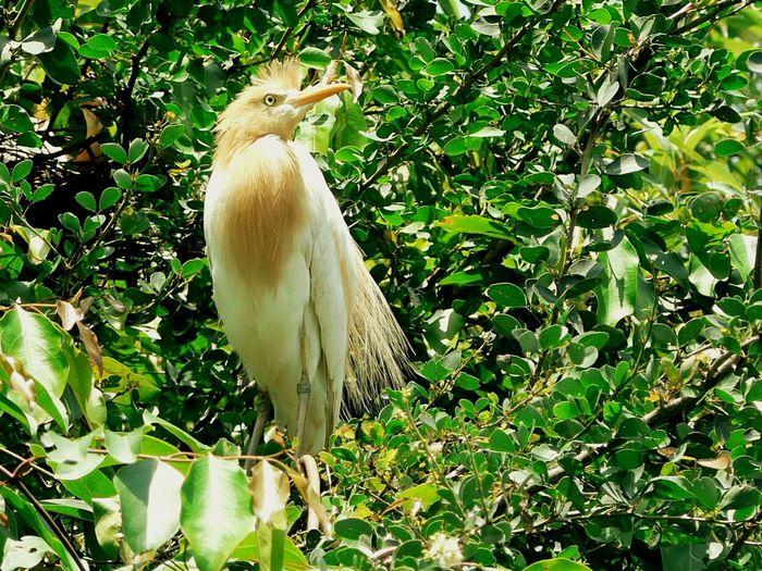 Standing Strong Bird Photography Golden Bird Pride EyeEm Best Shots EyeEm Nature Lover Birdwatching Birds_collection Eyem Birds The Bird Shot