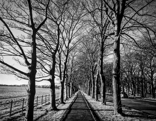 Instant Urban Coldest Day 2017 Bare Tree Tree Nature Branch Tree Trunk Tranquility EyeEm Ready   Tranquil Scene Beauty In Nature Sky Day No People Winter Scenics The Way Forward Cold Temperature Outdoors