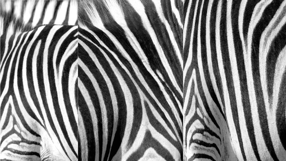 Zebra Pattern Geometrie Zebra Pattern Animal Themes Background Designs Background Texture Backgrounds Full Frame No People Pattern Striped Zebra